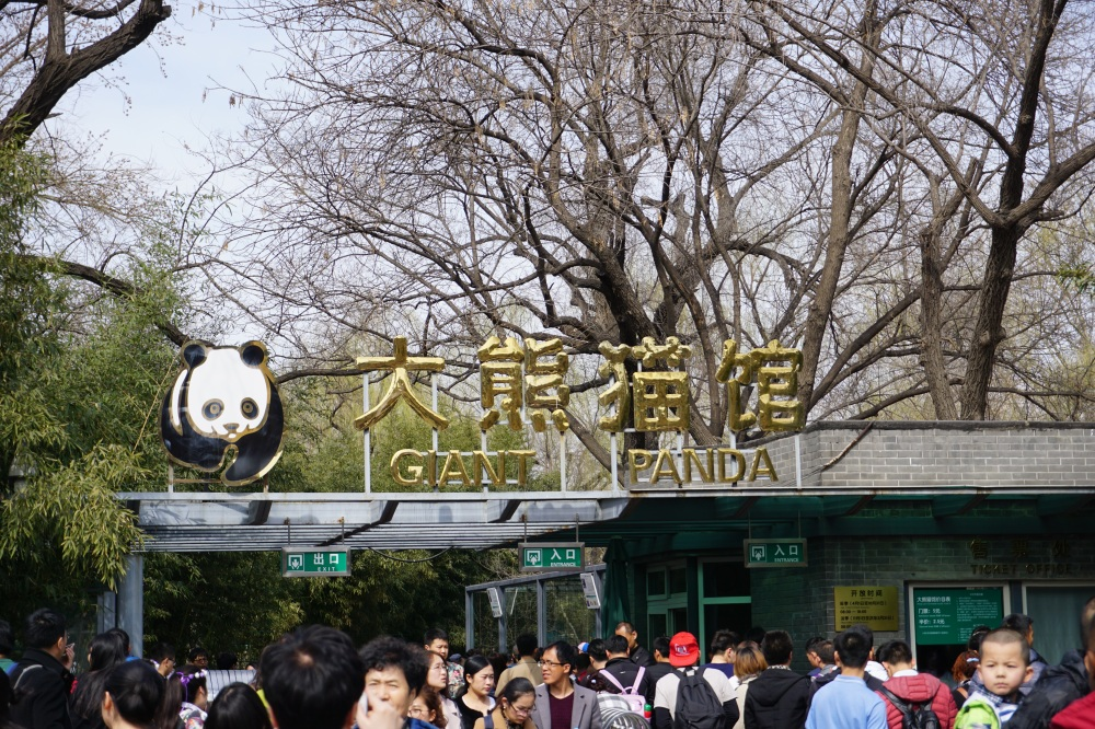 Dicas do Zoológico de Pequim
