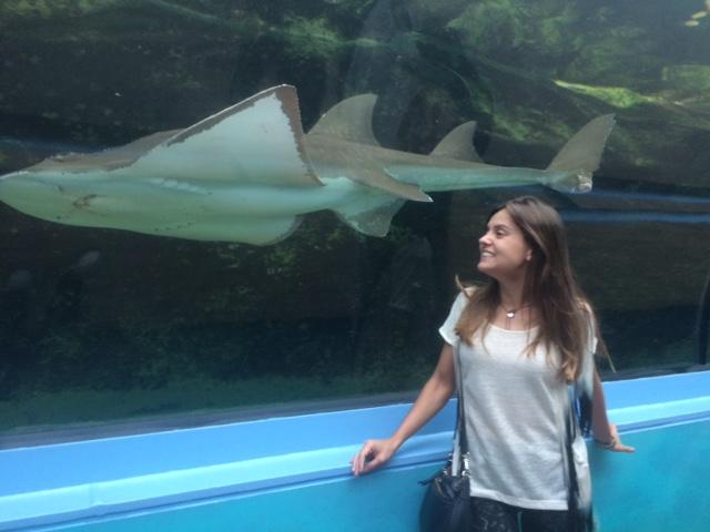 Sydney Aquarium e tubarão