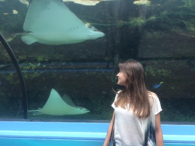 Arraias no aquário de Sydney
