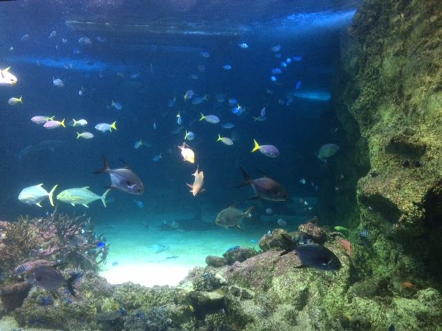 Sydney Aquarium em Darling Habour