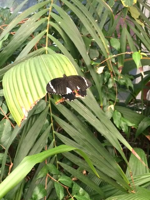 Wild life e estufa de borboletas