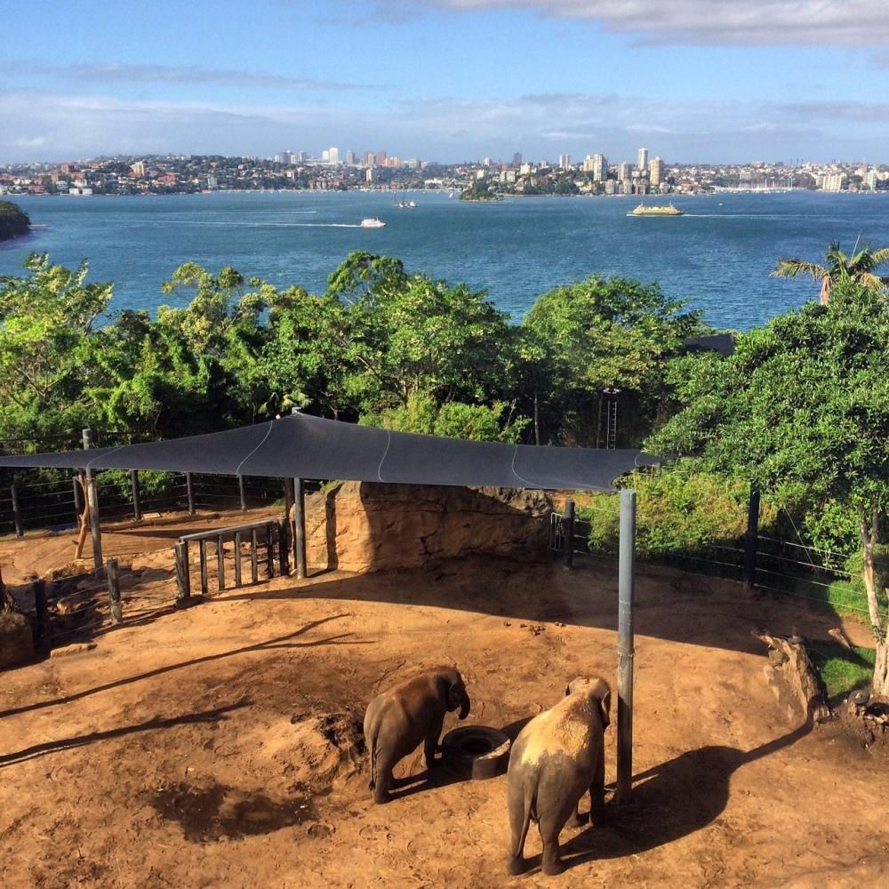 Zoológico de Sydney e a vista do teleférico