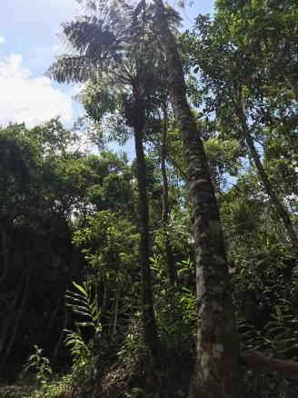 Essa árvore deve ter uns 200 anos, segundo nosso guia Josué
