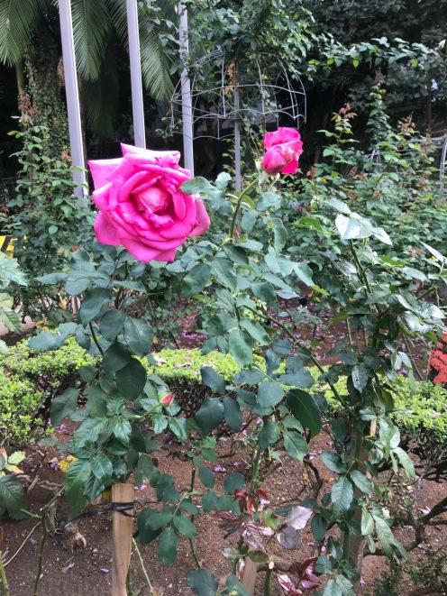 Jardim da Casa das Rosas