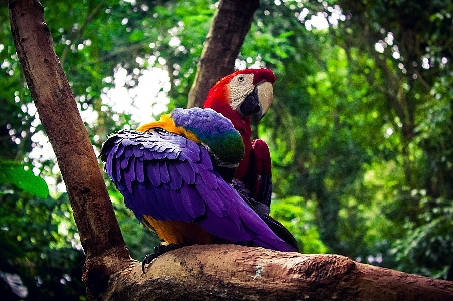 Parque das aves em Foz do Iguaçu, Sul do Brasil